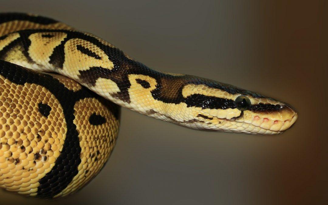 Exposing the Spirit of Python