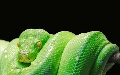 How the Enemy is Binding You – Prophetic Word